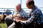 Two men examining FAMACHA tool