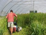 Terminating-Cover-Crops-in-High-Tunnel.jpg